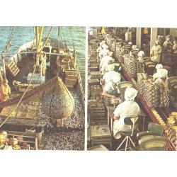 Viimsi kalatööstuse...