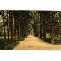 Tartu:Toome allee, enne 1907