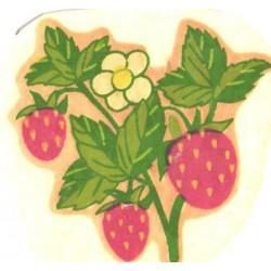 Vesikleepekas Maasikad,...