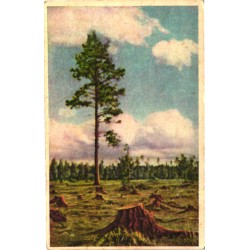 Raiesmik, männipuu, enne 1940